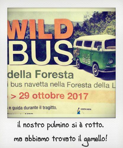Attività per famiglie foreste casentinesi