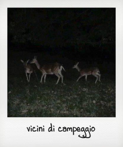 Fauna del parco delle foreste casentinesi: i daini