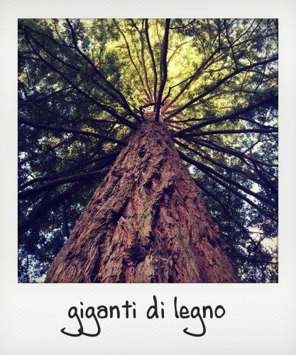Alberi monumentali al parco delle foreste casentinesi