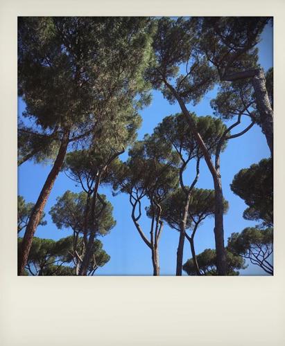 Vacanze a Roma con bambini: i pini di villa Borghese