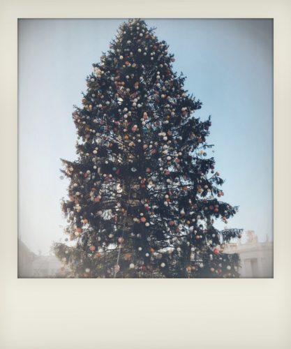 Vacanze di Natale a Roma: l'albero di piazza San Pietro