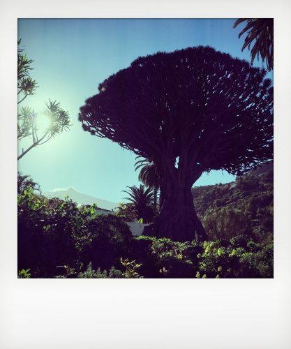 Tenerife - Il Teide dal Parco del drago