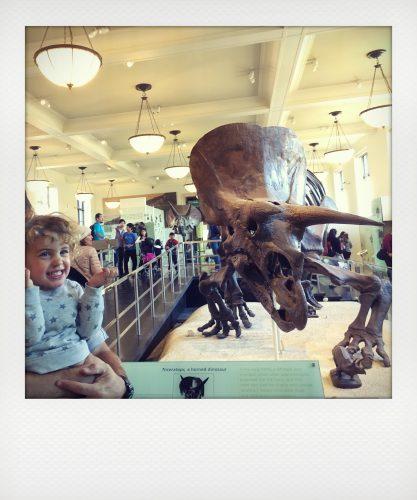 New York con bambini: Natural history museum